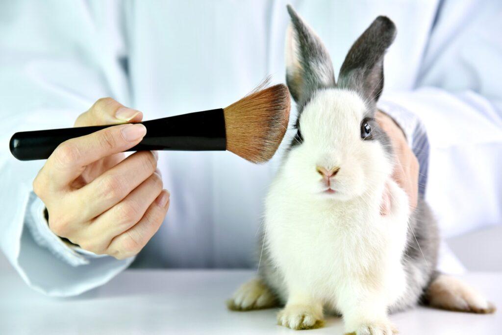 testy na zwierzętach